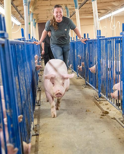 Grein Swine Unit