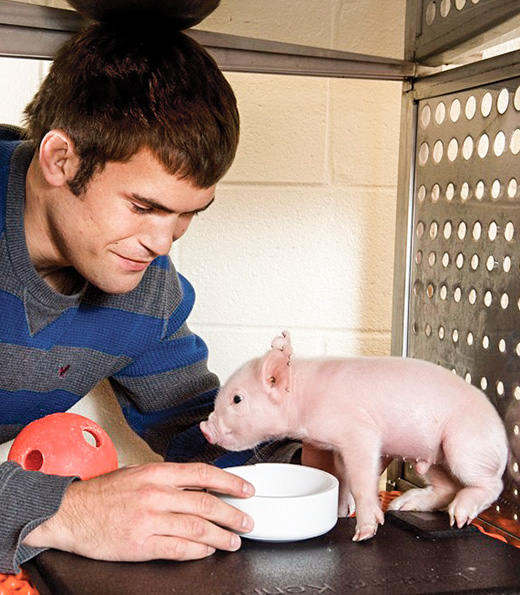 PNCL student helping piglet drink water