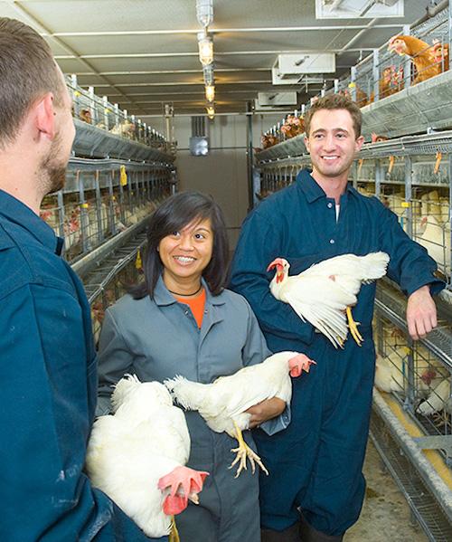 Poultry Research Farm