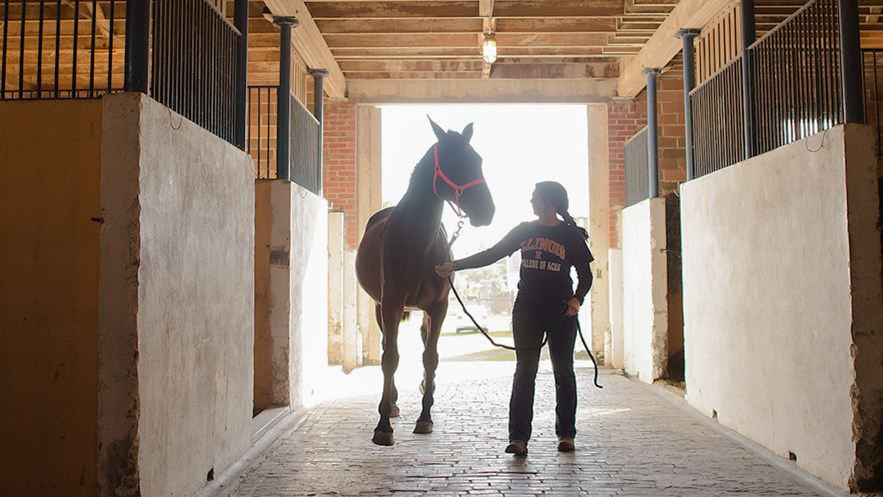 Student tending to a horse in a barn