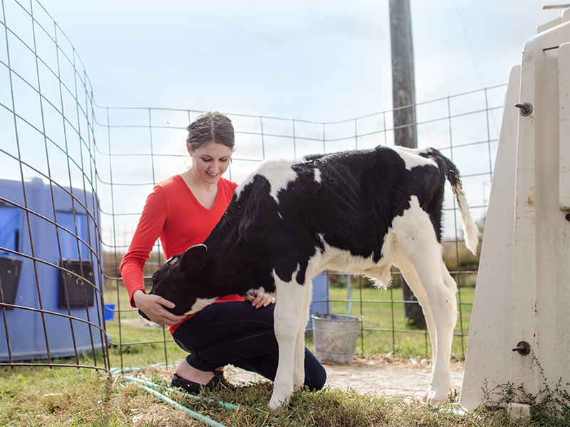 Student with dairy cow.