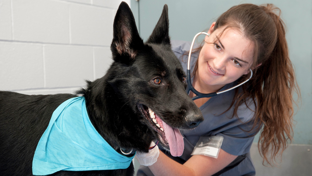 Student taking a dog's heart beat.