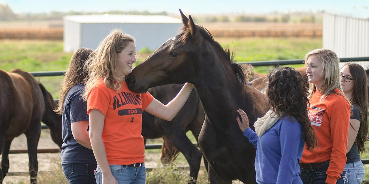 Students interacting with a horse.