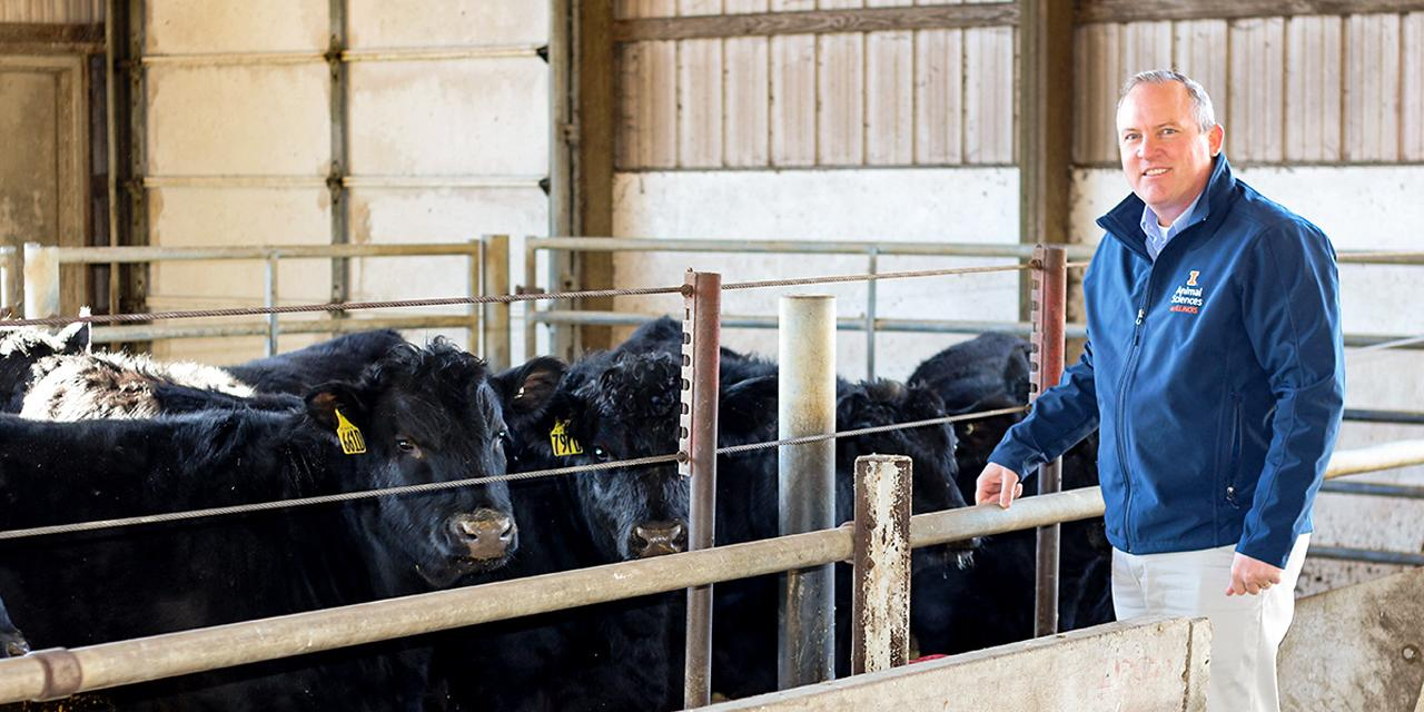 Dr. Johnson standing with cattle in an indoor facility