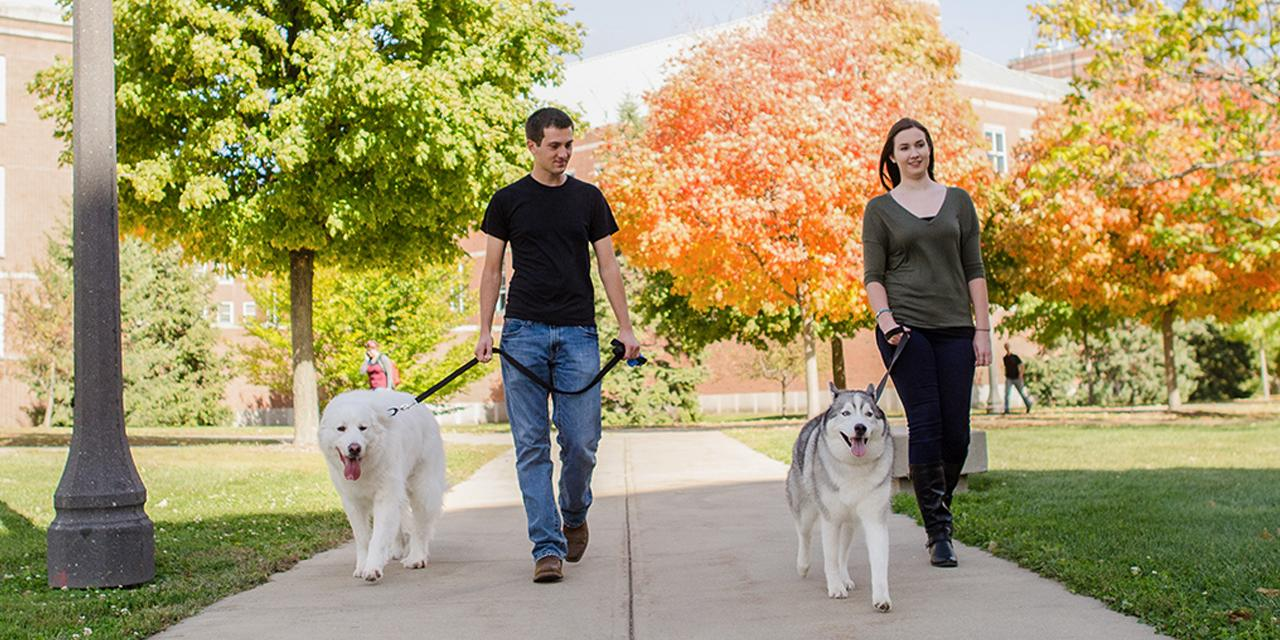 Students walking dogs on campus.