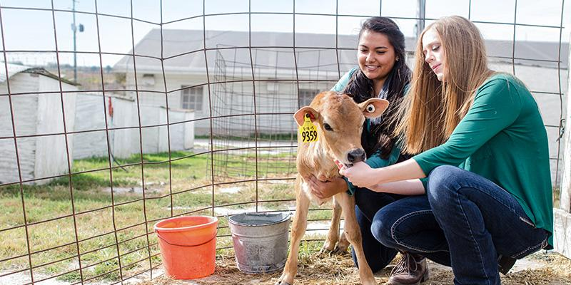 Two students hold a baby calf.