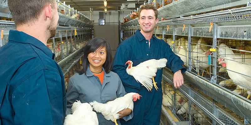 Students and instructor hold chickens at Poultry Research Farm