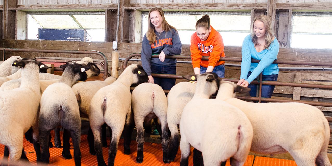 Animal Sciences students with sheep at an indoor facility