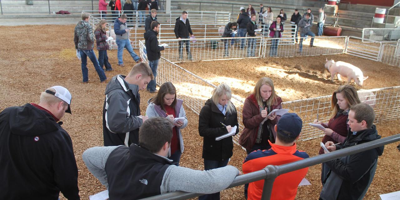 Judging team students at competition with pigs