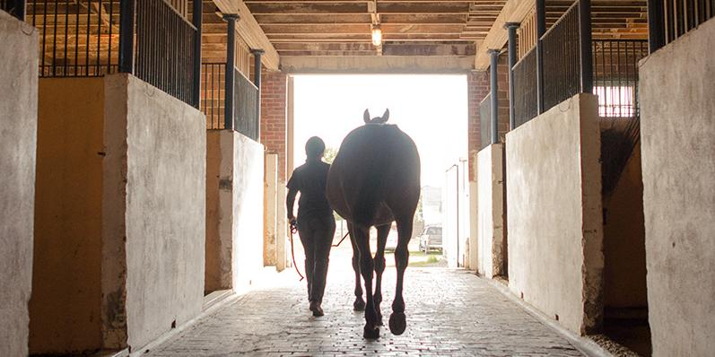 Silhouette of a student walking a horse out of the stable
