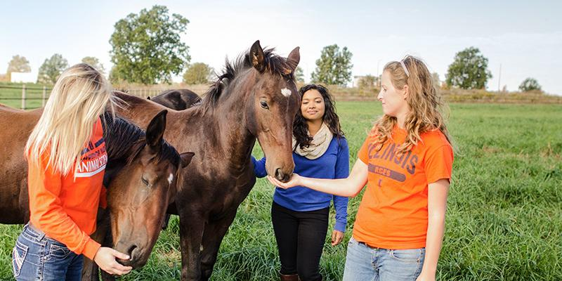 Students with a horse at the broodmare farm.